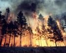 50 000 рублей за информацию о поджигателях